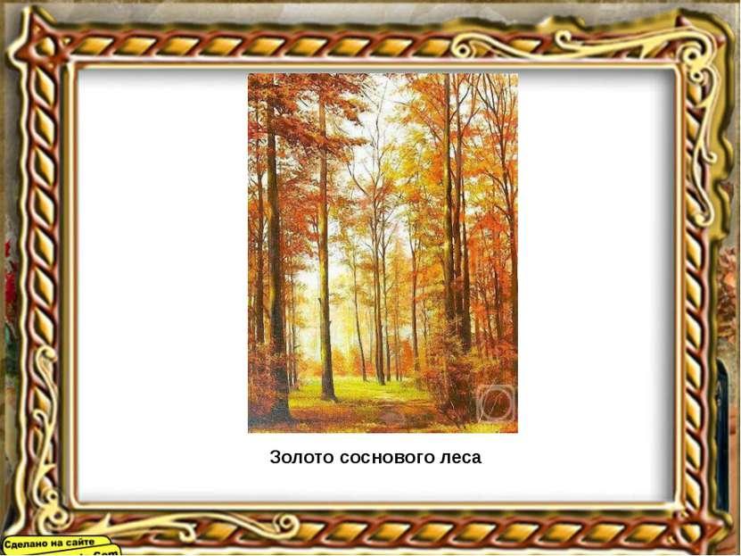 Золото соснового леса