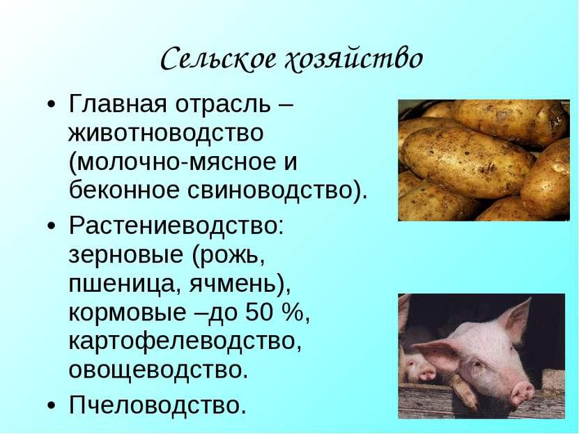 Сельское хозяйство Главная отрасль – животноводство (молочно-мясное и беконно...