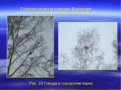 Рис. 16 Гнезда в городском парке Гнезда птиц в городе Бердске