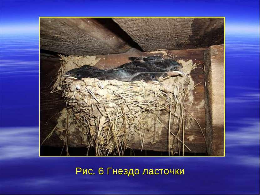 Рис. 6 Гнездо ласточки