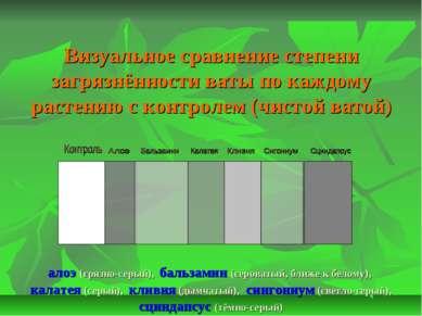 Визуальное сравнение степени загрязнённости ваты по каждому растению с контро...