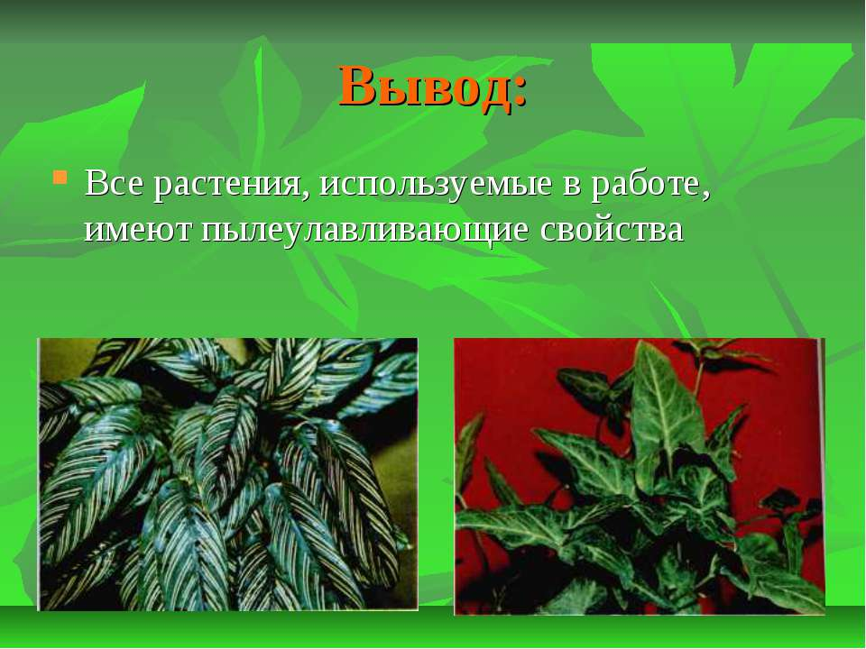 Вывод: Все растения, используемые в работе, имеют пылеулавливающие свойства