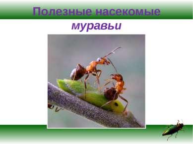 Полезные насекомые муравьи