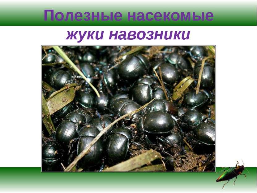 Полезные насекомые жуки навозники