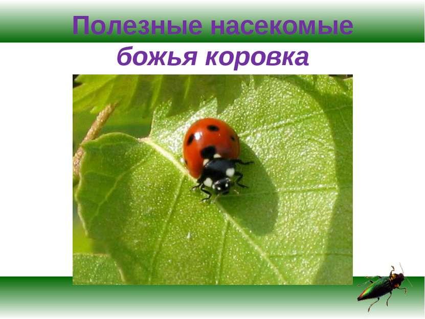 Полезные насекомые божья коровка