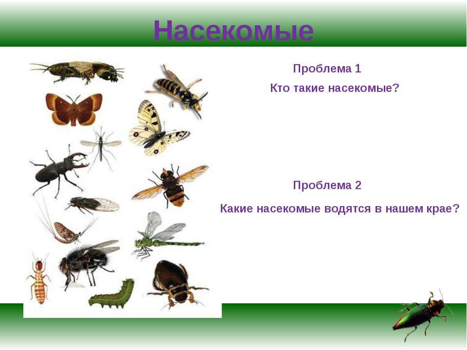 Насекомые Проблема 1 Кто такие насекомые? Проблема 2 Какие насекомые водятся ...