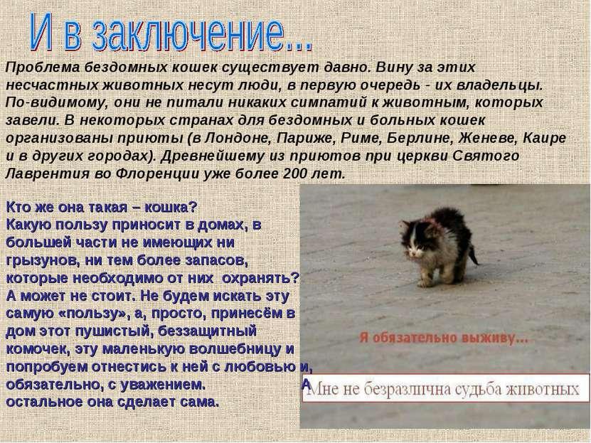 Проблема бездомных кошек существует давно. Вину за этих несчастных животных н...