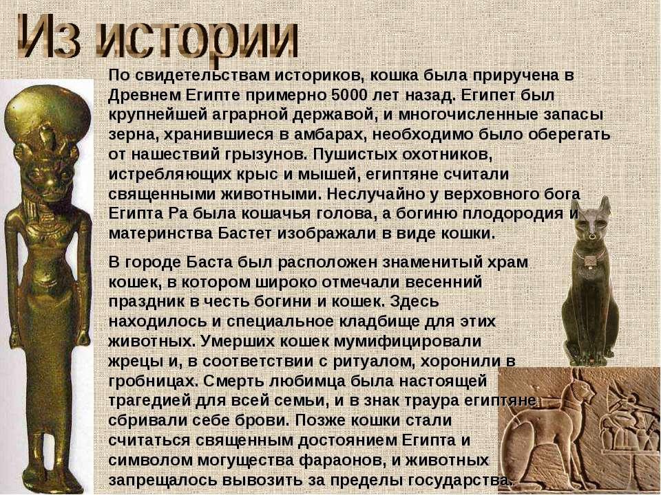 По свидетельствам историков, кошка была приручена в Древнем Египте примерно 5...