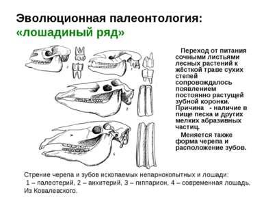 Эволюционная палеонтология: «лошадиный ряд» Переход от питания сочными листья...