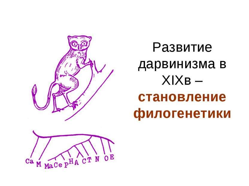 Развитие дарвинизма в XIXв – становление филогенетики