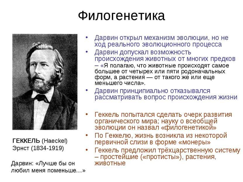 Филогенетика Дарвин открыл механизм эволюции, но не ход реального эволюционно...