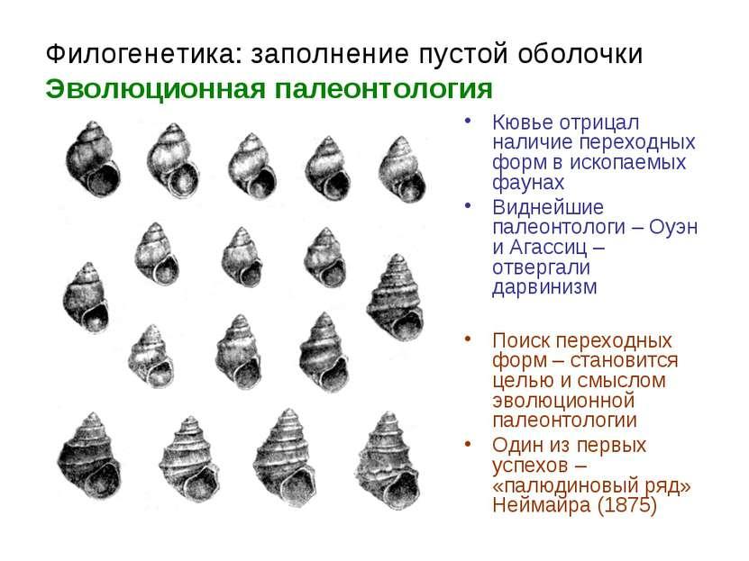 Филогенетика: заполнение пустой оболочки Эволюционная палеонтология Кювье отр...