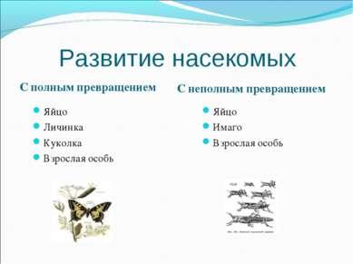 Развитие насекомых С полным превращением С неполным превращением Яйцо Личинка...
