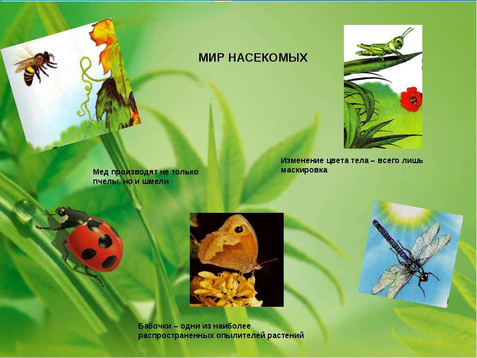 Изменение цвета тела – всего лишь маскировка Бабочки – одни из наиболее распр...