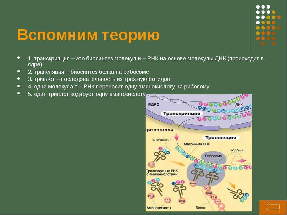 Вспомним теорию 1. транскрипция – это биосинтез молекул и – РНК на основе мол...
