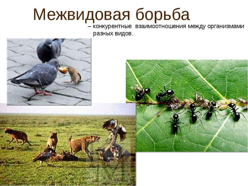 Межвидовая борьба – конкурентные взаимоотношения между организмами разных видов.