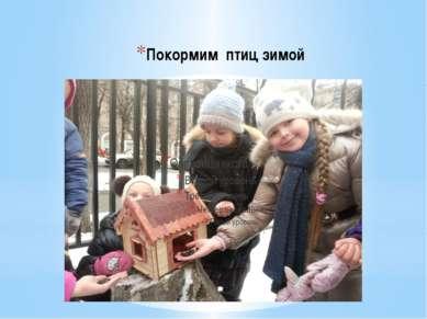 Покормим птиц зимой