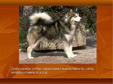 Для ездовых собак характерны выносливость, сила, неприхотливость в еде.