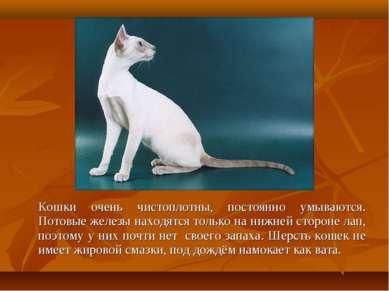 Кошки очень чистоплотны, постоянно умываются. Потовые железы находятся только...