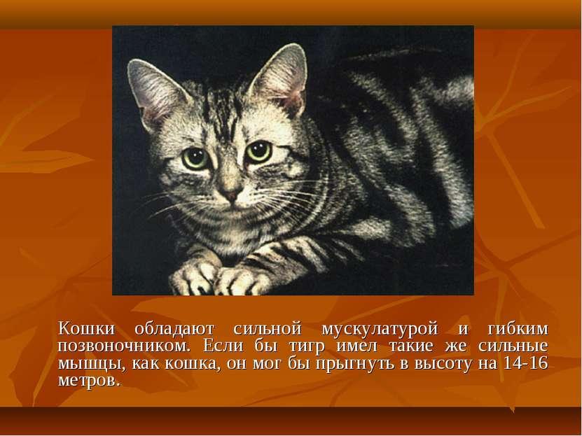 Кошки обладают сильной мускулатурой и гибким позвоночником. Если бы тигр имел...