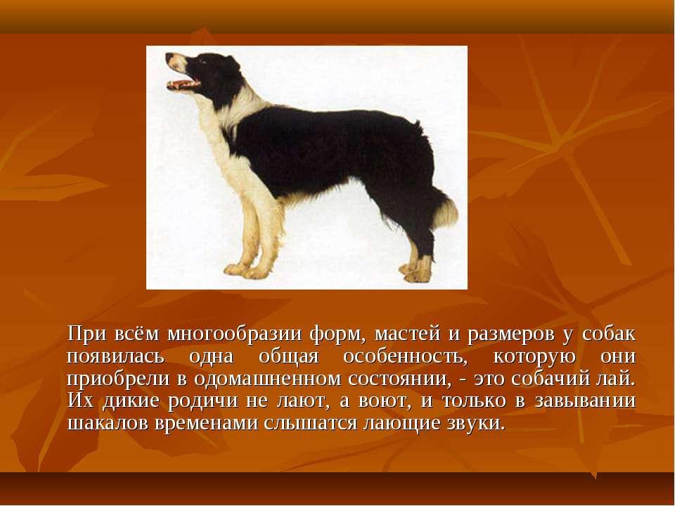 При всём многообразии форм, мастей и размеров у собак появилась одна общая ос...
