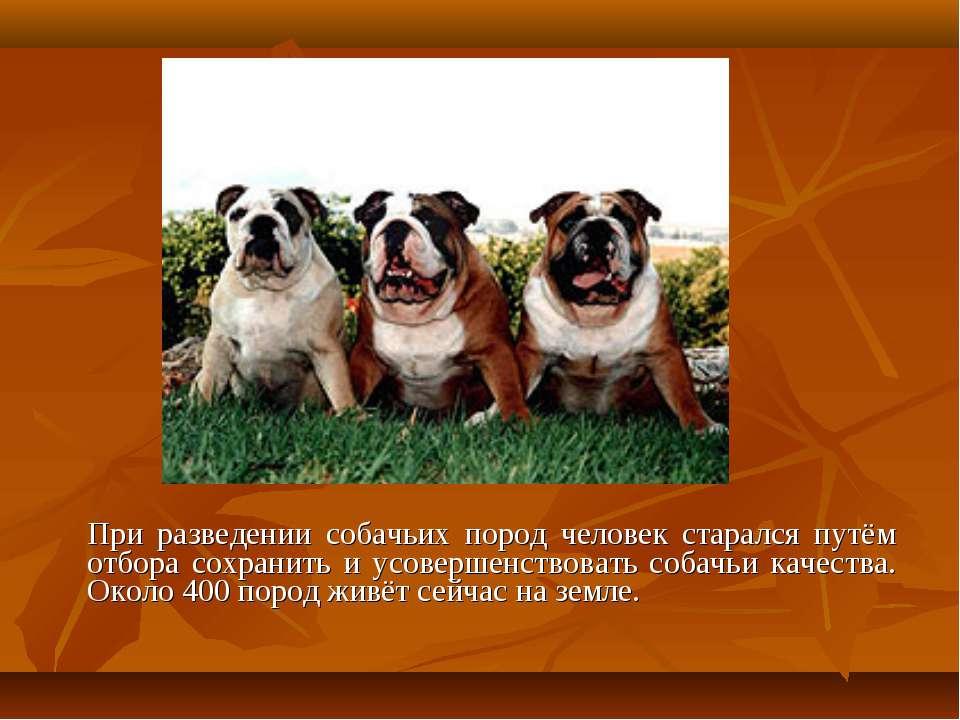 При разведении собачьих пород человек старался путём отбора сохранить и усове...