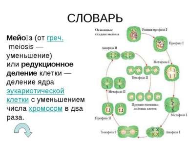 СЛОВАРЬ Мейо з(отгреч.meiosis— уменьшение) илиредукционное делениеклетк...