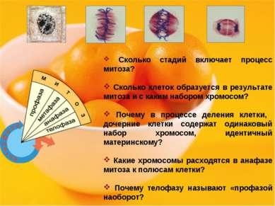 Сколько стадий включает процесс митоза? Сколько клеток образуется в результат...