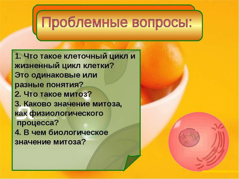 1. Что такое клеточный цикл и жизненный цикл клетки? Это одинаковые или разны...