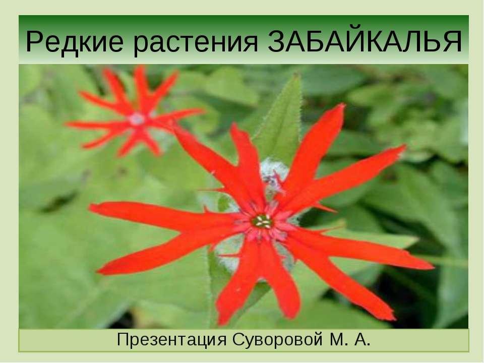 Редкие растения ЗАБАЙКАЛЬЯ Презентация Суворовой М. А.