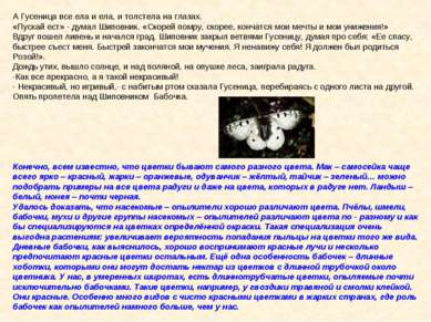 А Гусеница все ела и ела, и толстела на глазах. «Пускай ест» - думал Шиповник...