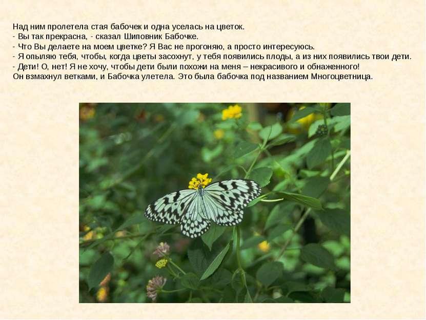 Над ним пролетела стая бабочек и одна уселась на цветок. - Вы так прекрасна, ...