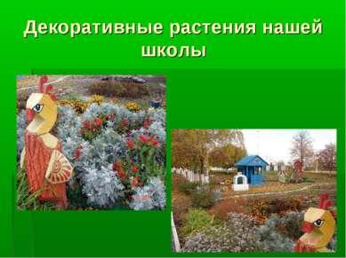 Декоративные растения нашей школы