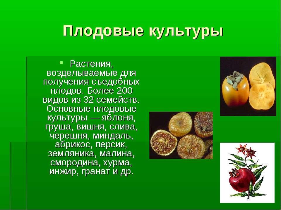 Плодовые культуры Растения, возделываемые для получения съедобных плодов. Бол...