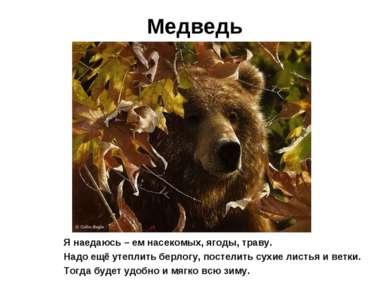 Медведь Я наедаюсь – ем насекомых, ягоды, траву. Надо ещё утеплить берлогу, п...