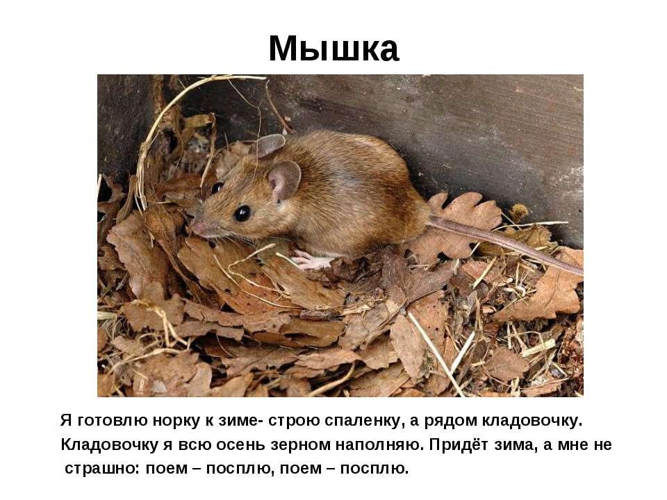 Мышка Я готовлю норку к зиме- строю спаленку, а рядом кладовочку. Кладовочку ...