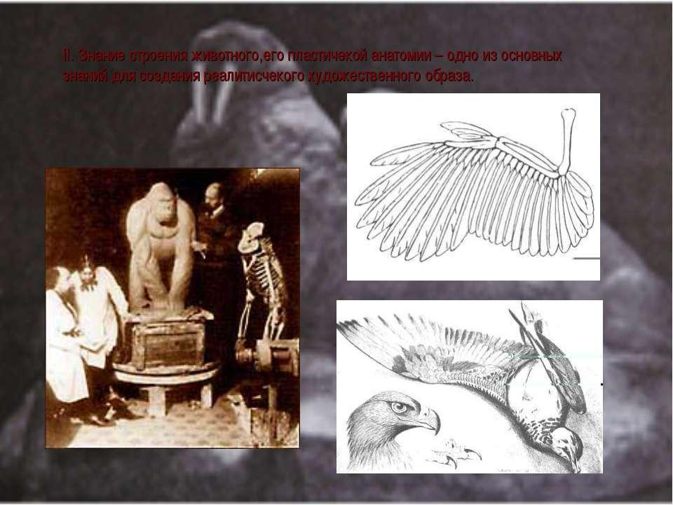 II. Знание строения животного,его плаcтичекой анатомии – одно из оcновных зна...