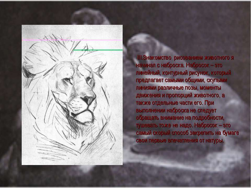 III.Знакомcтво рисованием животного я начинал с наброска. Набросок – это лине...
