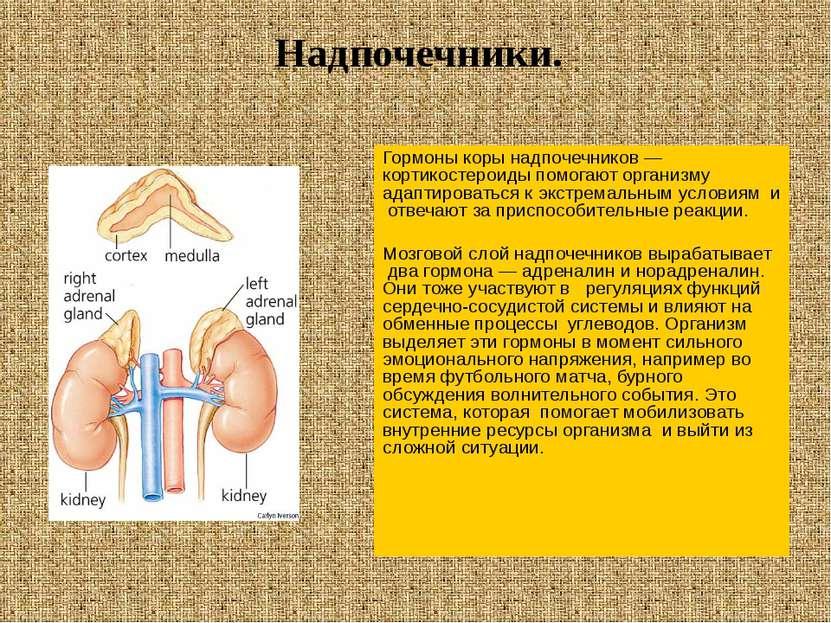 Гормоны коры надпочечников — кортикостероиды помогают организму адаптироватьс...