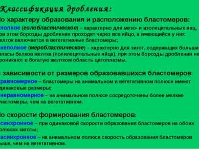 Классификация дробления: По характеру образования и расположению бластомеров:...