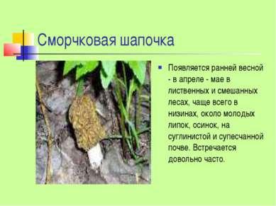 Сморчковая шапочка Появляется ранней весной - в апреле - мае в лиственных и с...
