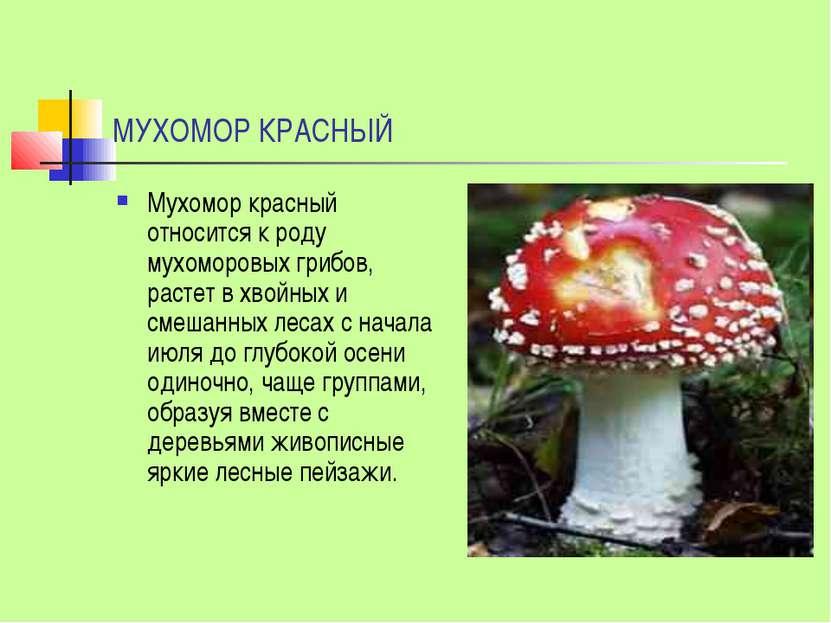 МУХОМОР КРАСНЫЙ Мухомор красный относится к роду мухоморовых грибов, растет в...