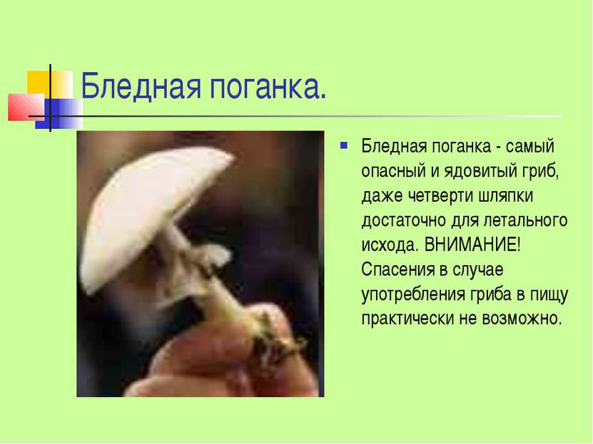 Бледная поганка. Бледная поганка - самый опасный и ядовитый гриб, даже четвер...