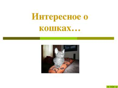 Интересное о кошках…
