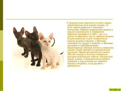 Стандартным принято считать окрас, характерный для диких кошек, то есть серая...