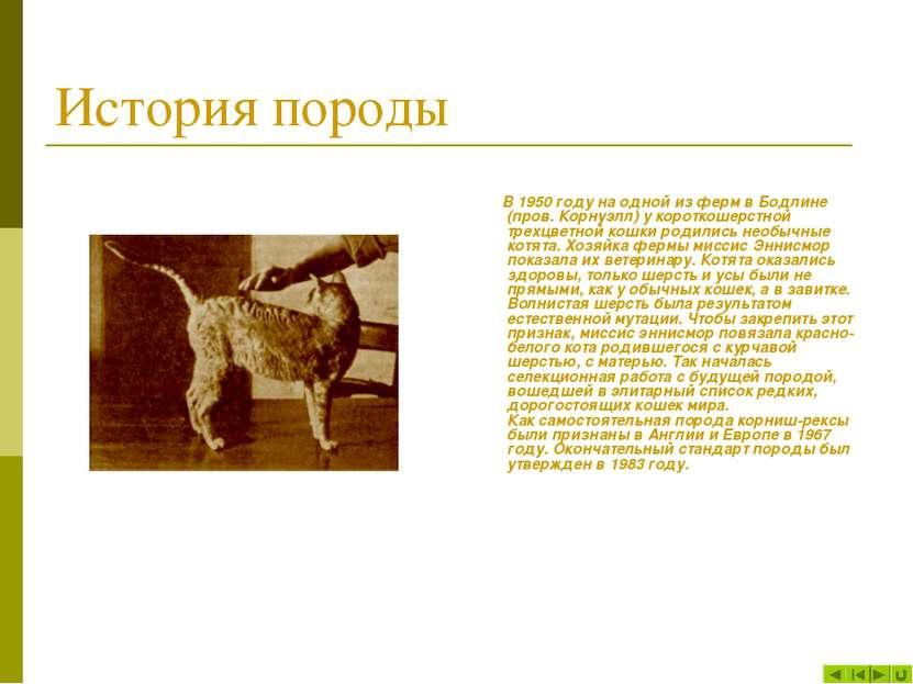 История породы В 1950 году на одной из ферм в Бодлине (пров. Корнуэлл) у коро...