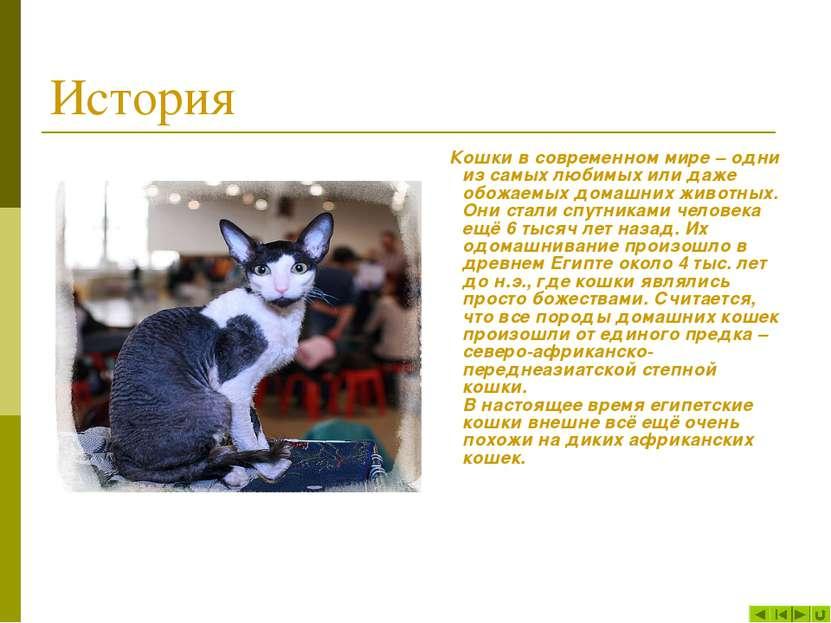 История Кошки в современном мире – одни из самых любимых или даже обожаемых д...