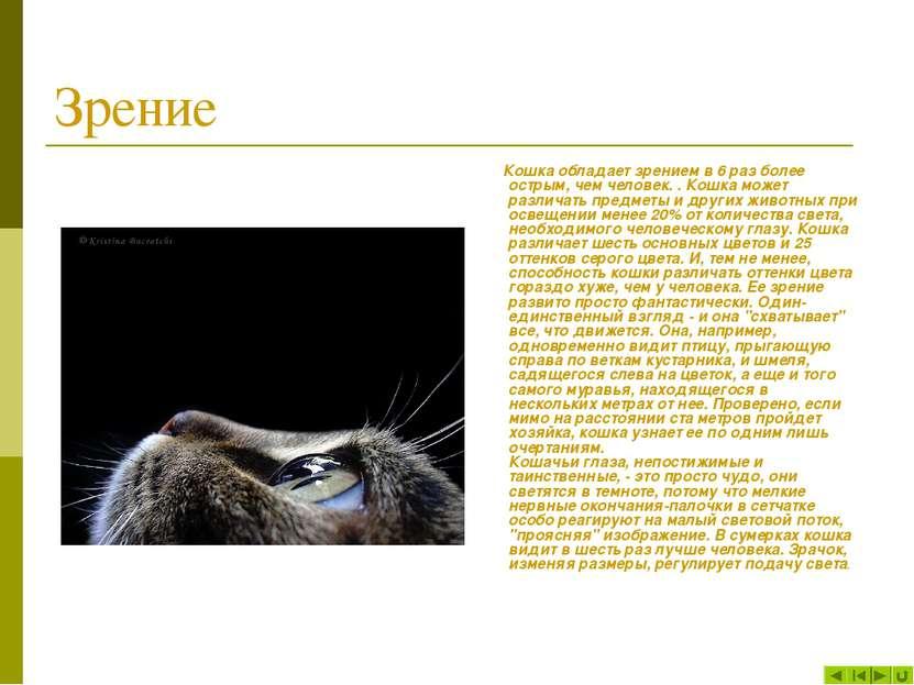 Зрение Кошка обладает зрением в 6 раз более острым, чем человек. . Кошка може...