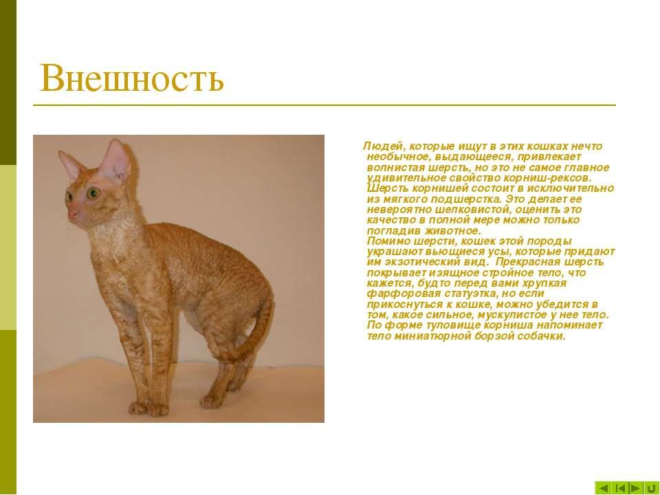 Внешность Людей, которые ищут в этих кошках нечто необычное, выдающееся, прив...