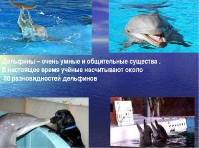 Дельфины – очень умные и общительные существа . В настоящее время учёные насч...